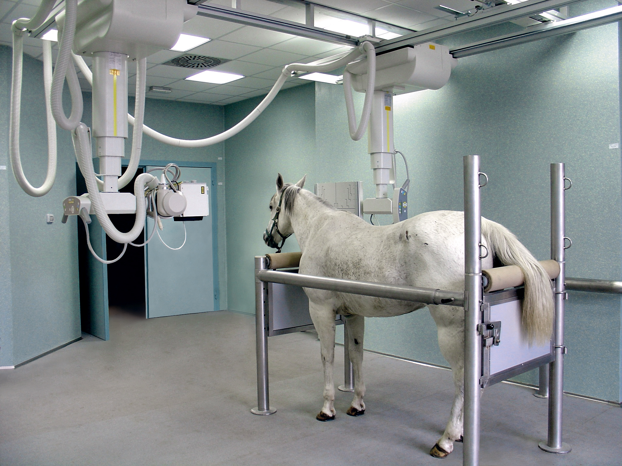 ZooMax-Equine-Röntgensystem
